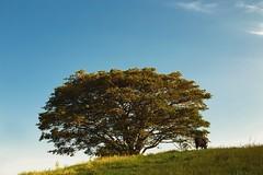 Um pedacinho de Salete (Francine de Mattos) Tags: canon cores landscape 50mm retrato santacatarina luznatural francinedemattos fotografeumaideia amoremformadefoto