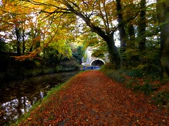 On The Pennine Way (raymondo12 A TRUE BRIT,) Tags: bridge water leedsliverpool canal tree boat autumn yorkshire pennineway