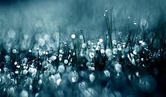 Still dancing (GillK2012) Tags: nature grass dof backlight dew bokeh helios44m