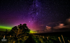 Lady Aurora (Impact Imagz) Tags: aurora northernlights auroraborealis merrydancers firchlis milkyway shootingstar stars nightsky nightphotography nightscape nightskies trees fence clouds canon samyang 14mm