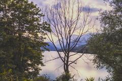 Ending Credits (Alessandro Tamburro) Tags: bellabruzzo abruzzo viaggi barrea lago estate tree alberi montagne landscape
