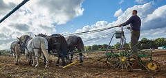 DSC05722 (Andy Oldster) Tags: eashing godalming farm plough ploughing heavyhorses shire sony alpha a65 slt