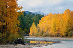 Autumn on the Yakima River (Meleah Reardon) Tags: cle elum washington yakima river pacific northwest western cascades fall color autumn yellow orange green trees larches golden mountain clouds water landscape nature