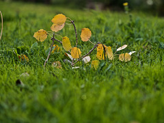 Tras la tempestad... (Luicabe) Tags: airelibre arbol cabello enazamorado exterior follaje hoja luicabe luis naturaleza otono planta profundidaddecampo yarat1 zoom ngc