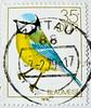 great stamp DDR 35pf Eurasian blue tit (Blaumeise, Cyanistes caeruleus, 蓝山雀, Plavček, herrerillo común, Mésange bleue, cinciarella, kék cinege, Обыкнове́нная лазо́ревка, Blåmes, Mavi baştankara) GDR Deutsche Demokratische Republik pullari ГДР марки 東德 (stampolina, thx! :)) Tags: ddr gdr deutschedemokratischerepublik germany easterngermany stamps stamp 切手 briefmarke briefmarken スタンプ postzegel zegel zegels марки टिकटों แสตมป์ znaczki 우표 frimærker frimärken frimerker 邮票 طوابع bollo francobollo francobolli bolli postes timbres sello sellos selo selos razítka γραμματόσημα bélyegek markica antspaudai маркица pulları tem perangko timbru eurasianbluetit blaumeise cyanistescaeruleus 蓝山雀 plavček herrerillocomún mésangebleue cinciarella kékcinege обыкнове́ннаялазо́ревка blåmes mavibaştankara