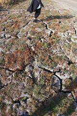 Cracks on dry lake soil (daveynin) Tags: drought dry lake crack marlena california