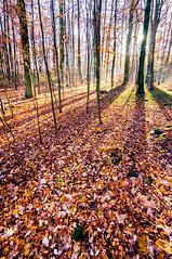 _DSC0042-2 (Mehmet Salam) Tags: tokina1116mmf28 autumn fall winter nature natural composition colors colours ultrawideangle 11mm light sonyalphaslta37 germany hessen