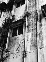 Wall Panjim (Alexandre William) Tags: inde india panjim wall mur hauteur high window fenêtre cables tuyaux pipes feuilles city sony