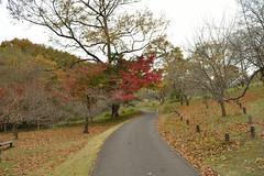 There is good future ahead (kzmiz) Tags: nikond800e japan saitama hikigun namegawamachi yamada musashi shinrin koen park