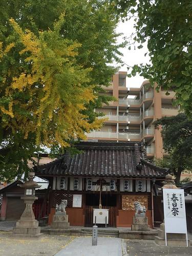 晩秋の神社