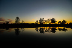 Fresh (Costigano) Tags: sunset silhouette reflection outdoor cartonhouse kildare ireland irish scenic scenery nature trees canon eos