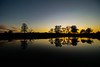 Fresh (Costigano) Tags: sunset silhouette reflection outdoor cartonhouse kildare ireland irish scenic scenery nature trees canon eos