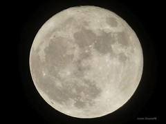 Supermoon 2016 (Anton Shomali - Thank you for over 800K views) Tags: supermoon 2016 super moon bright big large closest panasonic dmcfz70 luna november trending sky night