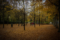 Parc de Bruxelles in autumn (Adri Pez) Tags: parc de bruxelles brussels park parque bruselas city ciudad capital autumn otoo trees rboles yellow amarillo orange naranja pareja couple people gente leaves hojas belgium blgica belgi canon 7d mark ii europe europa van brussel