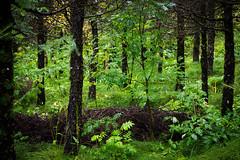 Lush (kzoop) Tags: iceland travel vacation europe lake myvatn nature hofdi tree trees forest woods hike hiking