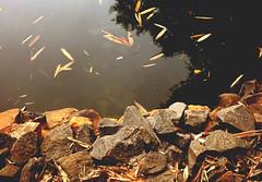 O lago e as pedras. (Rgis Cardoso) Tags: nature natureza park parque lake lago pedra stone rock rocha leaves folhas autumn outono