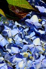 IMG_7726 (Almu_Martinez_Jiménez) Tags: galicia fisterra finisterre meigas sunset encanto flores playa mardefora tempestad