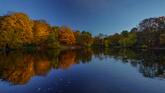 Reflective pond (TanzPanorama) Tags: seasons autumn fall kent england keston pond reflections tanzpanorama sonya7ii fe1635mmf4zaoss sonyilce7m2 sel1635z variotessartfe1635mmf4zaoss trees blue