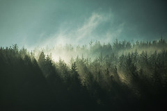 In the end we only regret the chances we didn't take.... 48/52 (Mire ) Tags: trees mist winter misty ireland donegal forest wood woods