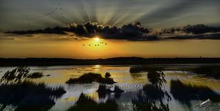 Sunset on the Salt Marsh