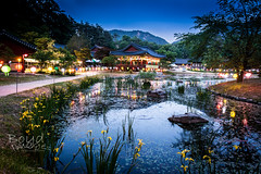 Temple by the pond (Boyd Images) Tags: longexposure flowers colors night reeds outdoors temple pond nightscape dusk lilly lanterns colorfullights nightshots southkorea bulyeongsa nikond7100