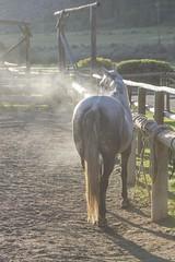 Steam (Nicola Berry) Tags: ranch morning horses horse slr nikon steam cm wyoming dslr 70200 equine dubois wy nikon70200 d5300 nikond5300