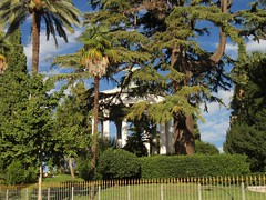 Parc Chambrun - Nice(06) 2de5 (3D-Stretch) Tags: park lebanon tree french nice riviera francaise cte paca cedar cote 06 arbre parc azur liban dazur alpesmaritimes franaise cdre cedrus provencealpesctedazur libani chambrun