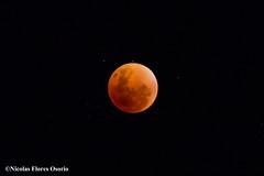 Eclipse (Nicophotographylife) Tags: chile moon de noche eclipse luna nocturna sangre norte copiapo llena