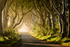 Magical Morning at the Dark Hedges (Kristin Repsher) Tags: trees ireland mist sunrise landscape nikon df fantasy northernireland magical ballymoney countyantrim antrim kingsroad beeches armoy gameofthrones darkhedges