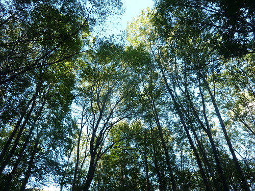 Bäume im Helenental