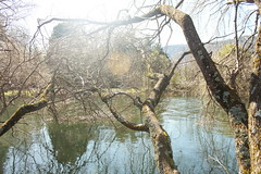 Brazos sedientos (Fcorubilar) Tags: trees lake lago rboles willow sunken sauces