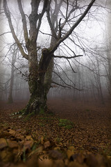 Bosque otoal (PILIRUBIO) Tags: wood tree fog arbol ngc bosque otoo niebla ltytr2 ltytr1