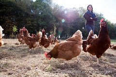 2015_10_12_Krust_0379.jpg (Christian.Patrick) Tags: alsace production poule ferme lieux oeuf hautrhin krust eteimbes fermedeloredubois