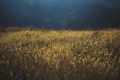 Dreaming (Ani  Melikyan) Tags: blue mountains yellow golden armenia garni