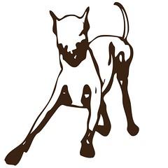 En Tehlikeli 10 Kpek Cinsi (thehayvan) Tags: dog love like angry sevgi hayvan