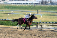 "2015-12-12 (15) r6 Forest G. Boyce on #8 Hold On Mama (JLeeFleenor) Tags: photos photography md marylandhorseracing marylandracing laurelpark horseracing forestgboyce jockey جُوكِي ""赛马骑师"" jinete ""競馬騎手"" dżokej jocheu คนขี่ม้าแข่ง jóquei žokej kilparatsastaja rennreiter fantino ""경마 기수"" жокей jokey người horses thoroughbreds equine equestrian cheval cavalo cavallo cavall caballo pferd paard perd hevonen hest hestur cal kon konj beygir capall ceffyl cuddy yarraman faras alogo soos kuda uma pfeerd koin حصان кон 马 häst άλογο סוס घोड़ा 馬 koń лошадь femaleathletes femalejockey outside outdoors maryland"