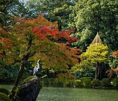 Fall colors appreciation (Tigra K) Tags: travel lake color tree bird nature rock japan garden jp e 2012 ishikawaken kanazawashi fallclr