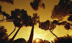 Rome, Villa Borghese, Lomography, 6 (Patrick.Raymond (2M views)) Tags: sunlight rome lomography nikon tramonto villa italie argentique borghese expressyourself nikonflickraward