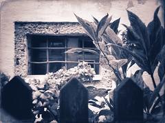 Strange Garden Window-Tone (Firery Broome) Tags: travel flowers stilllife plants salzburg window monochrome rain architecture fence reflections garden austria bars europe olympus raindrops hydrangea 365 toned apps everydayobject worldtravel ipad windowreflections alienskin gardenwindow windowwithbars exposure10 snapseed windowwednesdays olympusem10 europe2014