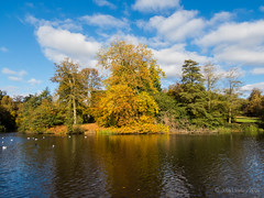 Autumn colour across the pond (Julia Livesey) Tags: autumn virginiawater englefieldgreen england unitedkingdom gb