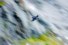 DSC03811 (frame=photo) Tags: bird mountain single grossglockner