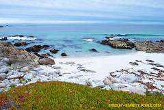 147 Monterey LR (bradleybennett) Tags: water river ocean stream creek beach shore shoreline line coast tide ice plant iceplant
