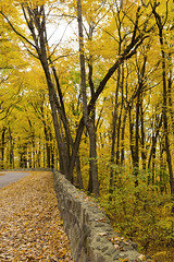 Devil's Lake -Along the Road - Autumn Glow (NikonD3xuser1(Thanks for 1.6 million visits)) Tags: usa wisconsin baraboo autumn rural park leaves golden wall rocks nikon d810 devilslake