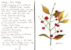 Spindle - EXPLORED (Hornbeam Arts) Tags: art journal sketch euonymus