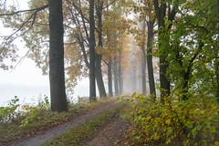 """""""Way into the fog"""" (anton_zach) Tags: natur nebel baum bume waldviertel weg eiche eichen bltter outdoor herbst autumn landschaft wald pflanze"""