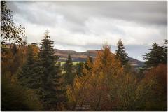 View (Jistfoties) Tags: dawyckgardens autumn scottishborders botanicgardens landscape canon5d canon24105f4
