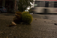 Chestnut SEPTA passing (karenchristine552) Tags: 64bus city landscape pennsylvania philadelphia rain septa street streetscene universitycity westphiladelphia wet