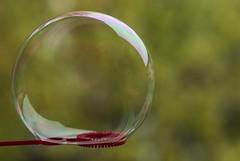 On the edge 33/365 (Tove Paqualin) Tags: edge macromondays macro bubble hmm green circle round