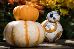 Fall Friends @sphero #BB8 (Alan Rappa) Tags: 2016 a6300 autumn bb8 droid fall halloween orange pumpkins sony sonya6300 sphero starwars theforceawakens toys tweetme