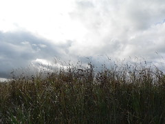 heavenwards (achatphoenix) Tags: ems eastfrisia riverems rheiderland roadtrip rural ostfriesland gras grass clouds nuages sky ciel cielo wolken himmel